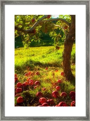 Apple Picking Framed Print by Joann Vitali