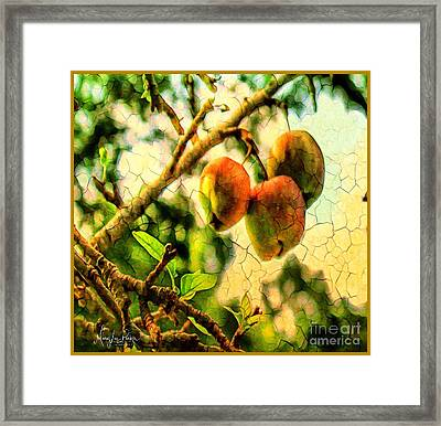 Apple  Season Framed Print