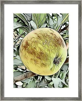 Apple Sketching Framed Print