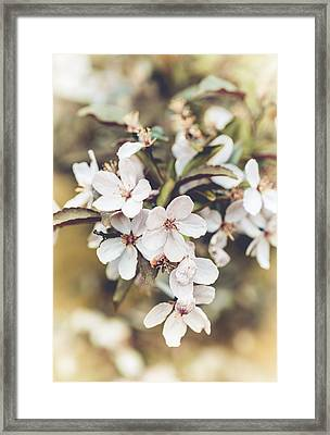 Framed Print featuring the photograph Apple Spice by Christi Kraft