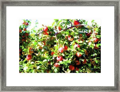 Apple Tree 1 Framed Print by Lanjee Chee