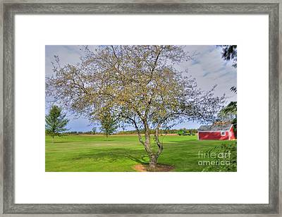Apple Tree Framed Print by Kathleen Struckle
