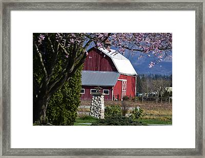 Apple Tree Pink And Barn Red Framed Print