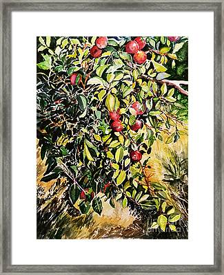 Framed Print featuring the painting Apple Tree by Priti Lathia