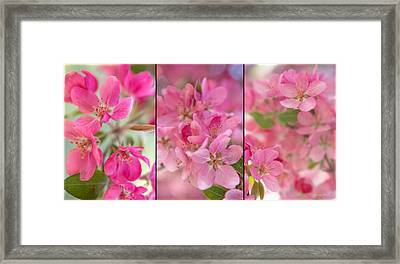 Apple Tree Triptych 2 Framed Print by Leland D Howard