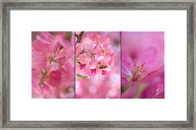 Apple Tree Triptych 3 Framed Print by Leland D Howard