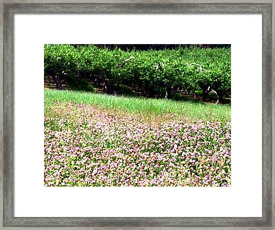 Apple Trees And Clover Framed Print by Will Borden