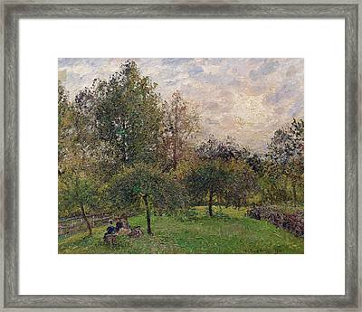 Apple Trees And Poplars In The Setting Sun Framed Print by Camille Pissarro