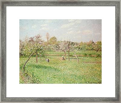 Apple Trees At Gragny Framed Print