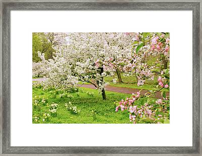 Apple Trees In Bloom Framed Print by Jessica Jenney