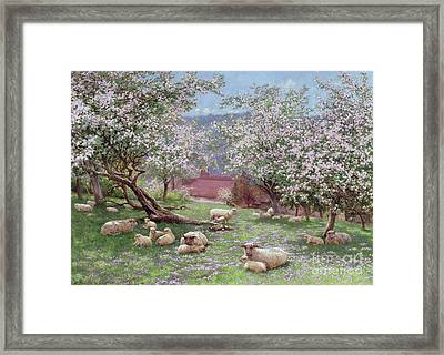 Appleblossom Framed Print by William Biscombe Gardner
