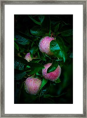 Apples After The Rain Framed Print