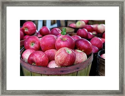 Apples Apples Apples Framed Print by Teri Virbickis