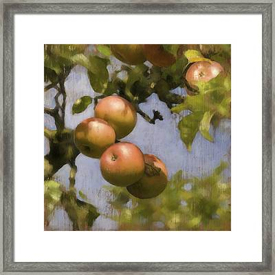 Apples On Wood Panel Framed Print