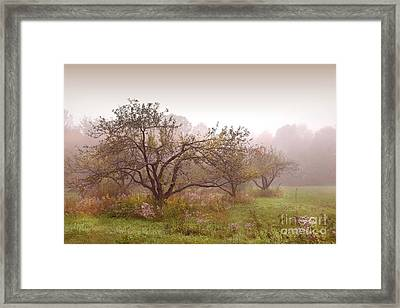 Apples Trees In The Mist Framed Print by Sandra Cunningham