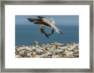 Applying The Brakes Framed Print