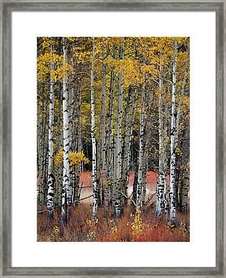 Appreciation Framed Print