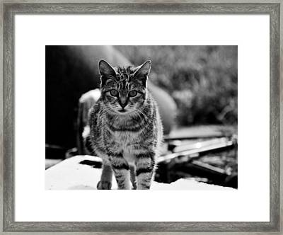 Framed Print featuring the photograph Approaching  by Chriss Pagani