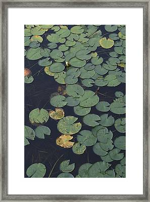 Approaching Lilly Framed Print by Alan Rutherford