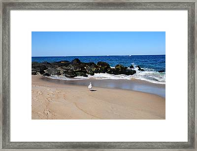 Framed Print featuring the photograph Approaching Seagull by JoAnn Lense