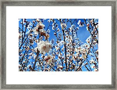 Framed Print featuring the photograph Apricot Blossoms by Glenn McCarthy Art and Photography
