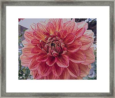 Apricot Dahlia Flower With Drawing Effect Framed Print