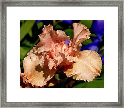 Apricot Framed Print by Kala King