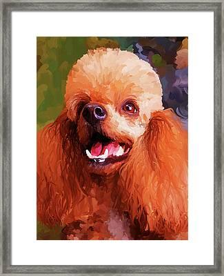 Apricot Poodle Framed Print by Jai Johnson