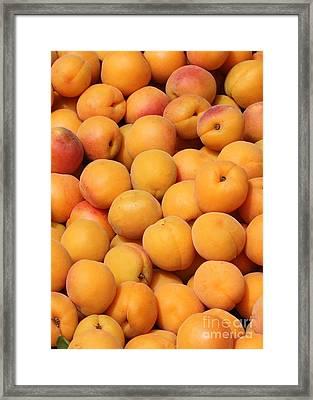 Apricots Framed Print by Carol Groenen