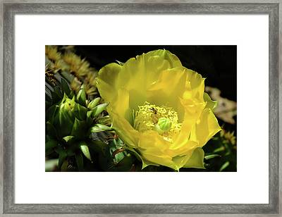 April Cactus Flower Framed Print by Bill Morgenstern