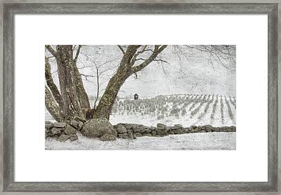 April Christmas Tree Farm Framed Print