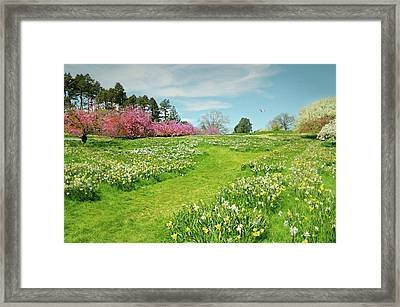 Framed Print featuring the photograph April Days by Diana Angstadt