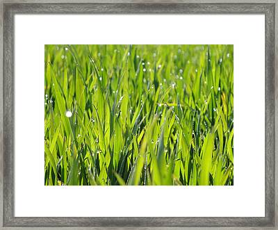 April Dewdrop Fairylights Framed Print