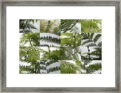 April Ferns 2 Framed Print