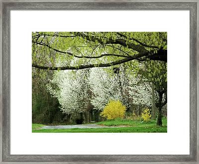 April In Virginia Framed Print