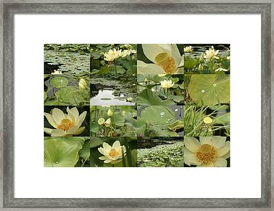 April Lotus Pond Framed Print