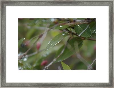 April Showers 1 Framed Print by Antonio Romero
