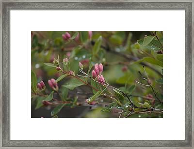 April Showers 2 Framed Print by Antonio Romero