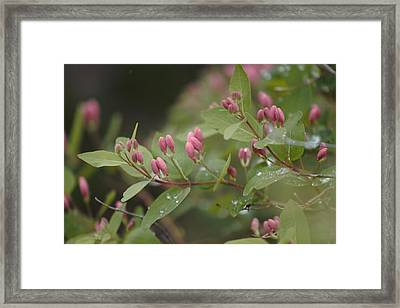 April Showers 4 Framed Print