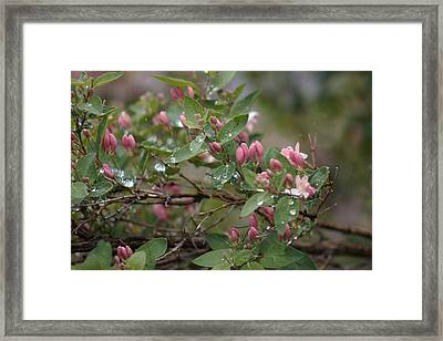 April Showers 6 Framed Print