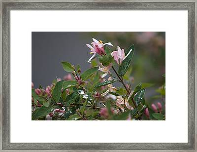 April Showers 7 Framed Print