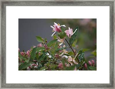 April Showers 7 Framed Print by Antonio Romero