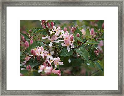 April Showers 8 Framed Print by Antonio Romero