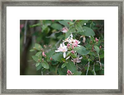 April Showers 9 Framed Print