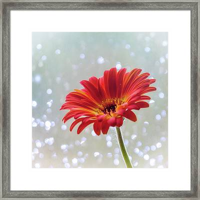 Framed Print featuring the photograph April Showers Gerbera Daisy Square by Terry DeLuco