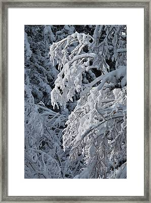 April Snow Framed Print