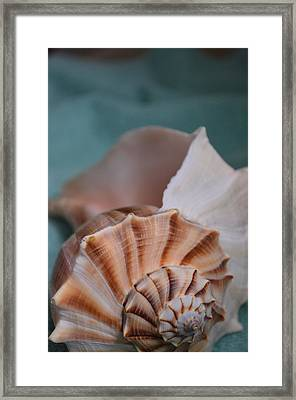 Aqua Dream - Pinkish Sconch Shell On Turquoise Wave Framed Print by Sylvie Marie