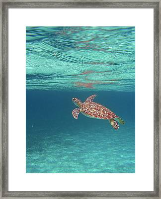 Aqua Dreams Framed Print by Li Newton