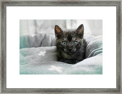 Aqua Eyes 2 By Kaye Menner Framed Print