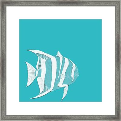 Aqua Fish  Framed Print by Bonnie Bruno